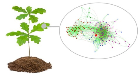Phyllosphere microbial network